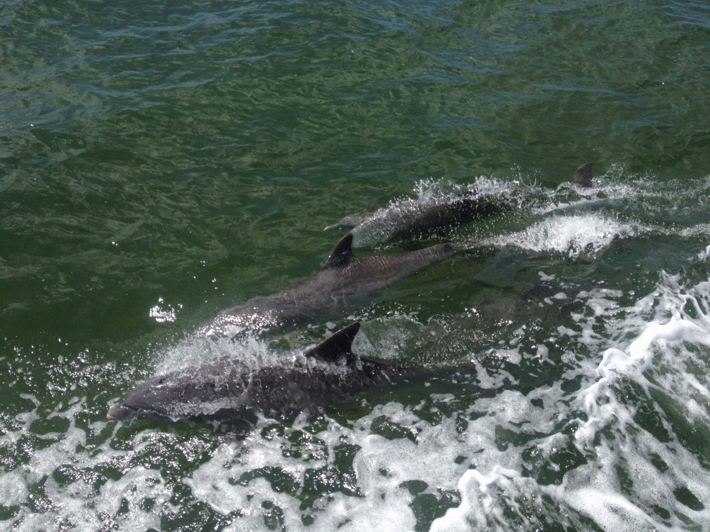 famille visiter miami en famille que faire a miami avec des enfants croisière bateau baie de biscayne dauphins baignade maisons des stars visite en français miami off road