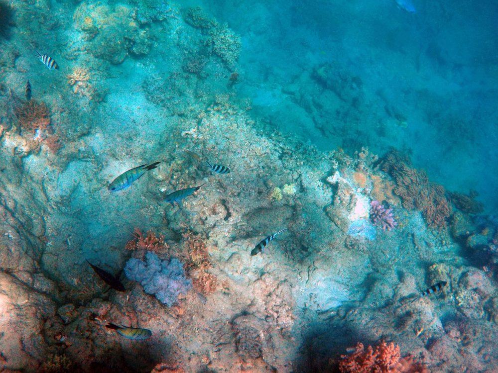 key largo bateau à fond de verre barrière de corail sous l'eau en mer miami en famille que faire à miami avec des enfants blog miami off road