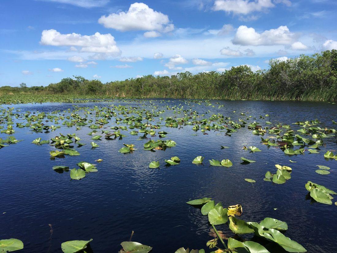 1 semaine à miami everglades airboat air boat alligator parc national marécage 1 semaine à miami beach visiter miami en une semaine que faire à miami en 1 semaine 7 jours à miami blog miami off road