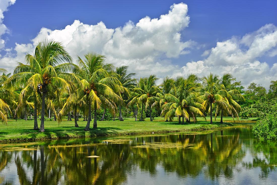 1 semaine à miami fairchild tropical bottais garden jardin botanique coral gables 1 semaine à miami beach visiter miami en une semaine que faire à miami en 1 semaine 7 jours à miami blog miami off road
