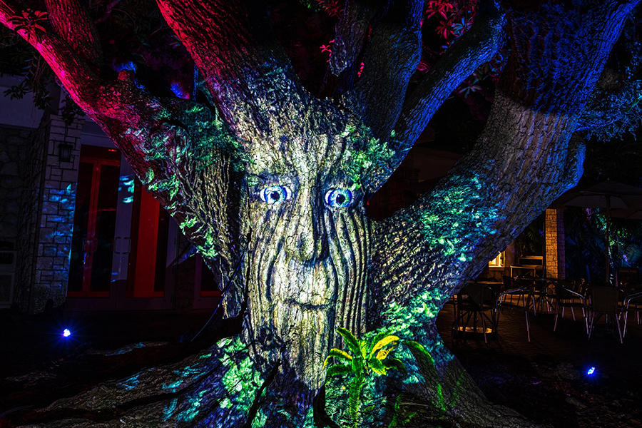novembre fairchild garden the night garden illuminations pumpkin pied thanksgiving automne que faire a miami en novembre visiter miami en français que faire en floride blog miami off road