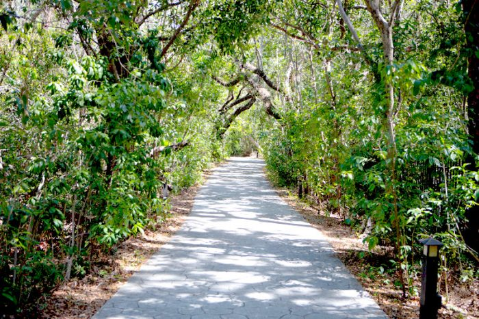 journée à Miami coconut grove foret hammock barnacle state park nature visiter miami en 1 journée escale à miami l'essentiel de Miami en 1 jour visiter miami en francais visite guidée de Miami bons plans à Miami miami off road