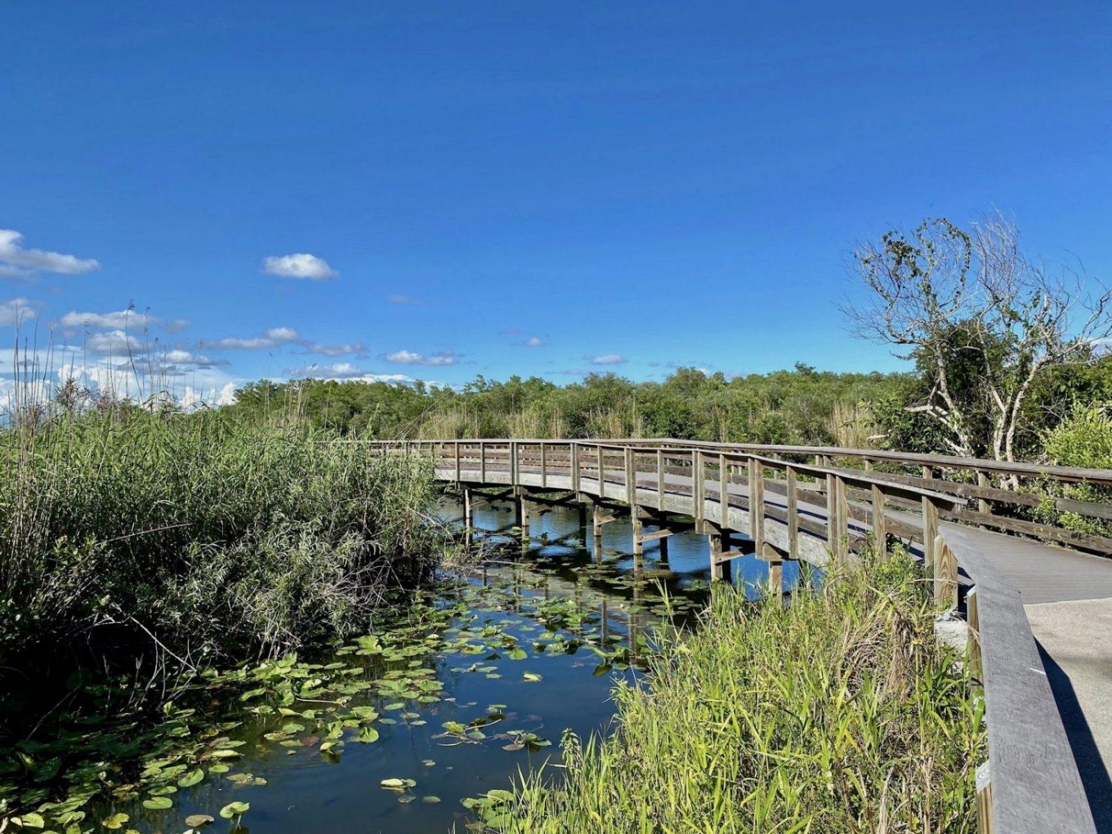 Le ponton de l'anhinga trail, le chemin le plus connu de la partie Sud des Everglades. Un des coups de coeur de Miami Off Road